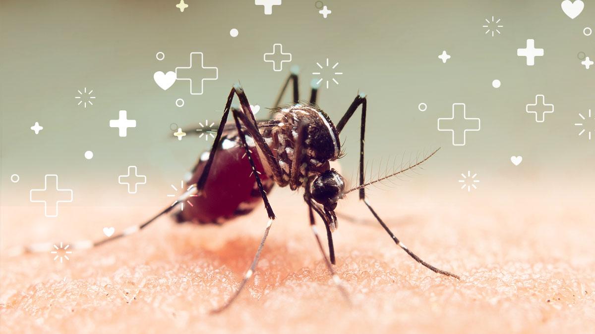 epidemia de dengue