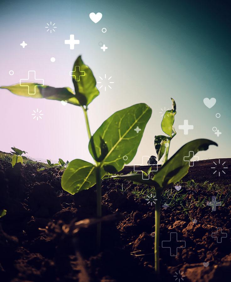 nuevas políticas para la agricultura y los sistemas alimentarios